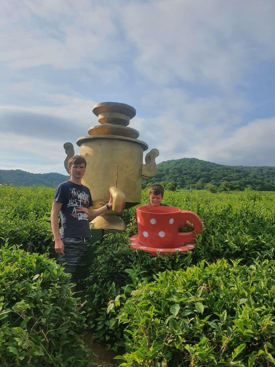 Чайная плантация